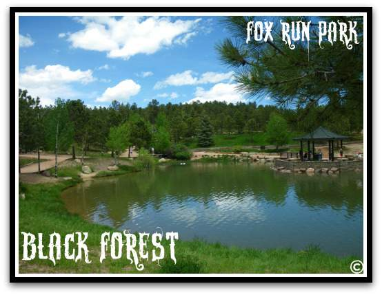 Black Forest-Fox Run